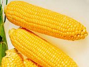 Закупаем кукурузу в Украине Николаев