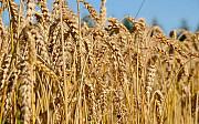 Куплю зерновые, зерноотходы. Любые варианты Сумы