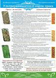 Сорт Полтавське золотисте (просо посівне) 1 репродукція ВІД ОРИГІНАТОРА! Полтава