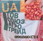 Насіння кукурудзи Хотин Новомосковск