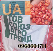 Семена кукурузы Хотин Новомосковск