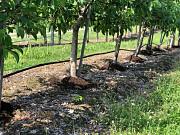 Органическое удобрение - компост Запорожье