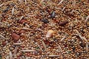 Зерновые, зерносмеси, зерноотходы, некондиция. Любые варианты Чернигов