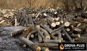 Рубані дрова Рожище – ціна. Купити метровий кругляк Рожище