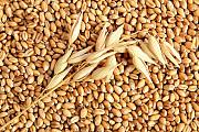 Куплю зерновые. Кукуруза, пшеница, ячмень, овес и тд Киев