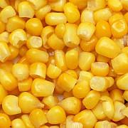 Кукурудза куплю будь-які обсяги. Самовивіз Запорожье