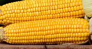 Кукуруза куплю. Закупаем кукурузу. Чернигов