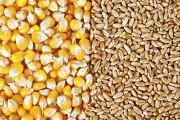 Куплю кукурузу, фуражную пшеницу, сою Харьков