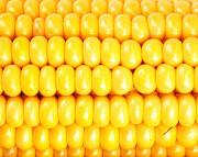 Закуповуємо кукурудзу з будь-якою вологістю Сумы