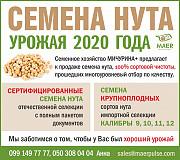 Насіння нуту закордонної та української селекціі Одесса