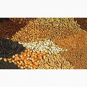 Куплю кукурудзу, фуражну пшеницю, сою Полтава