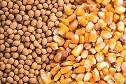 Кукуруза, фуражная пшеница, соя Кропивницкий