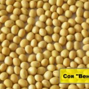 Семена сои под раундап от производителя Киев