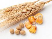 Куплю кукурудзу, пшеницю, сою. Зерновідходи Полтава