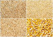 Зерновые. Зерноотходы. Кукуруза. Пшеница. Соя. Кропивницкий