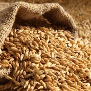 Закупка зерновых. Куплю кукурузу, просо, ячмень Сумы