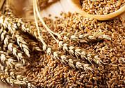 Закупівля зернових. Куплю кукурудзу, просо, ячмінь Чернигов