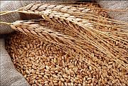 Куплю зерновые. Продать зерновые Харьков