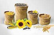 Куплю кукурудза, соя, пшениця, соняшник Кропивницкий
