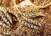 Куплю зернові. Продати зернові Сумы