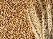Куплю зернові, олійні Чернигов