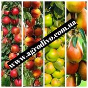 """Колоновидные и среднерослые деревья, а также различный кустарник на сайте """"Агродиво"""" Луцк"""