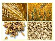 Пшениця, кукурудза, соя, соняшник. Закупівля Киев