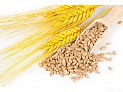 Некондиция, зерноотходы. Кукуруза, пшеница, соя, подсолнечник. Киев