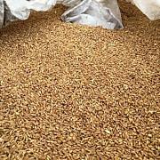 Пшеница Фуражная продам оптом Киев