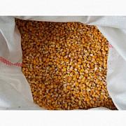 Продам кукурузу фуражную Киев