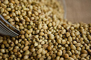 Посевмат семена кориандр Pueblo Пуэбло Днепр