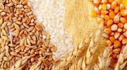 Купить зерно и зерновые Украинского происхождения Одесса