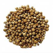 Семена кориандра опт сорт Пуэбло. Запорожье