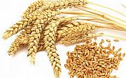 Закуповуємо зернові. Пшениця, жито. Чернигов