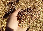 Закуповуємо зерновідходи зернові, олійні, бобові Харьков