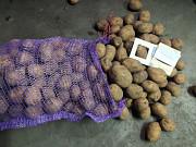 Картопля товарна. Картопля насіннєва. Сумы