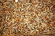 Куплю зерновідходи зернові, бобові, олійні Черкассы