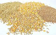 Зерновідходи зернові, олійні, бобові куплю Черкассы