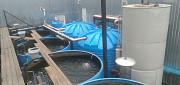 Осетр для зарыбления водоемов Чернигов