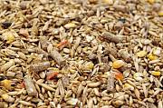 Постоянно закупаем зерноотходы зерновые, масличные, бобовые Сумы