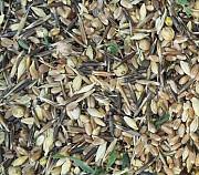 Куплю отходы зерновые, масличные, бобовые Черкассы