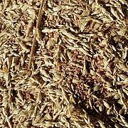 Куплю зерноотходы зерновые, масличные, бобовые Днепр