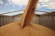 Транспортировка зерновых грузов. Услуги зерновозов Винница
