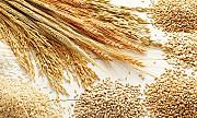 Пшениця, ячмінь, ріпак, горох куплю з місця Винница