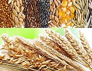 Закупаем отходы кукурузы, пшеницы, сои, подсолнечника Днепр