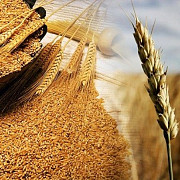 Закуповуємо відходи кукурудзи, пшениці, сої, соняшнику Киев