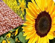 Закуповуємо зерновідходи соняшникові, ріпакові Винница