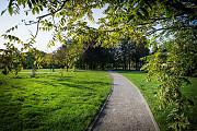 Продаємо травосуміш для благоустрою парків і міських територій. Луцк
