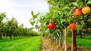 Продам травосуміш для благоустрою садових територій та садових міжрядь Киев