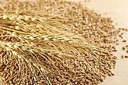 Постоянно закупаю зерноотходы зерновые, масличные, бобовые! Кропивницкий